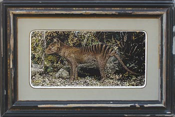 THYLACINE, Thylacinus cynocephalus - Click here for bigger picture