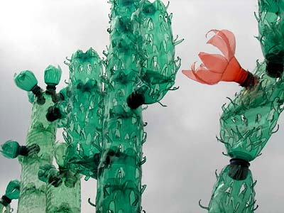 CACTUSES - Click here for bigger picture
